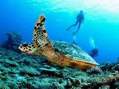 Swim amongst underwater sea life at Taj Exotica Resort & Spa, Maldives