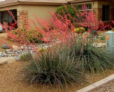 Red yucca   Where it will grow: Hardy to -20 degrees Fahrenheit (USDA zone 5), Water requirement: Low , Light requirement: Full sun to filtered shade. Drought tolerant once established, but looks best with deep watering twice a month spring through fall; attracts hummingbirds. Seasonal interest: Flowers in spring and off and on throughout the summer. When to plant: Fall or spring