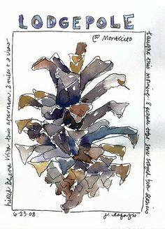 23 June Montecito 2008 by janelafazio Watercolor Journal, Watercolor Trees, Watercolor Paintings, Watercolors, Sketchbook Inspiration, Art Sketchbook, Painting & Drawing, Nature Journal, Garden Journal