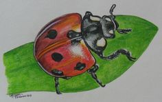 Colour pencil drawing - Derwent Inktense Pencils on watercolour paper