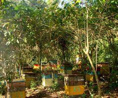 Organic, Non GMO Brazilian Bee Hives