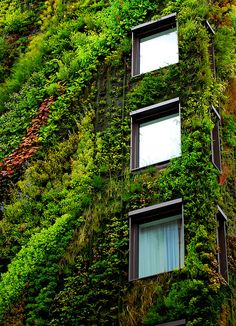 Vertical Garden (Mur Végétal) Living Walls by Patrick Blanc - Homeli Green Architecture, Sustainable Architecture, Living Green Wall, Living Walls, Landscape Design, Garden Design, Vertical Green Wall, Green Facade, Green Building