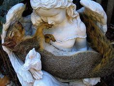 ... that he gave the all creatures their own angels to take care of them.  And, this squirrel knows that and has sought the arms of an angel.