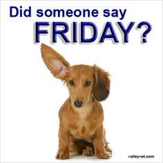 Image result for dachshunds TGIF