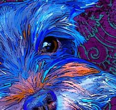 Miniature Schnauzer Paintings | miniature schnauzer art and pictures | IfollowPics