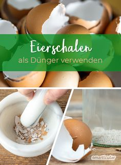 Do not throw away egg shells, but process to perfect liquid fertilizer Eggshells are rich in lime and micronutrients. With little effort and a little water it becomes a practical liquid fertilizer. Fertilizer For Plants, Liquid Fertilizer, Garden Fertilizers, Garden Pots, Love Garden, Vegetable Garden, Fall Vegetables, Fall Plants, Companion Planting