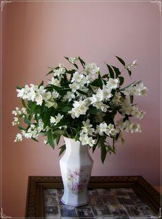 Jasmine flowers <3