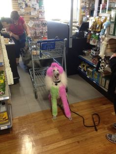 Isis was on her way to Woofstock but not before stopping in our Oakville store! Vacuums, Home Appliances, Pets, Store, House Appliances, Animals And Pets, Vacuum Cleaners, Tent