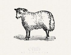 Sheep Antique Woodblock Graphic JPG PNG Digital Download Printable Vintage ClipArt