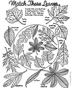 cutest autumn coloring pages probably 1950s lots more too