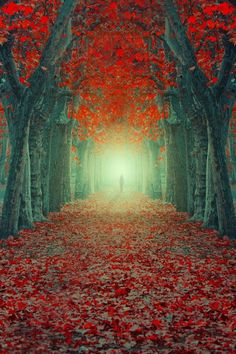""" One Life by Ildiko Neer """
