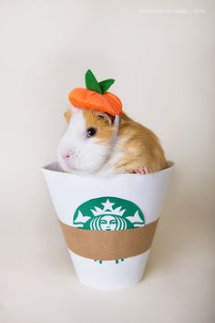 Hey - I'm going down to Pigbucks. You want a Pigkin Spice Latte? #guineapigs