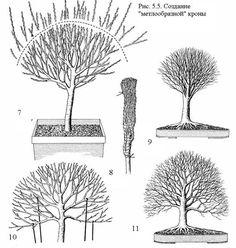 Bonsai Tree Care, Plantas Bonsai, Over The Garden Wall, Bonsai Garden, Garden Inspiration, Garden Ideas, Permaculture, Greenery, Garden Design