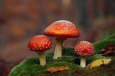 Beautiful Mushroom wallpaper x Mushroom Art, Mushroom Fungi, Mushroom Crafts, Landscaping Tools, Colors Of Fire, Enchanted Wood, House Plants Decor, Good Tutorials, Creative Pictures