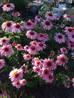 Missing summer already! Mustard Seed Gardens