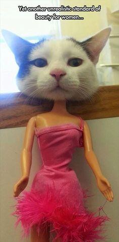 kittyhead