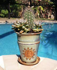 terracotta clay pottery sun planter with cactus & succulents