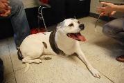 Canine Cancer Studies at Penn
