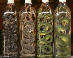 Snake Wine (HabuSake)  Snake wine is predominantly found in Asia and is typically produced by infusing entire snakes into rice wine. The alcohol is believed to have medicinal properties that improve everything from hair loss to sexual virility.  Via: i1.trekearth.com & http://www.buzzfeed.com/h2/fark/discovery/10-of-the-weirdest-alcoholic-beverages-in-the-worl-70b3