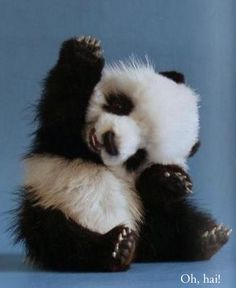 Cute animals who came to say hello { #cute #animals #pets #panda }