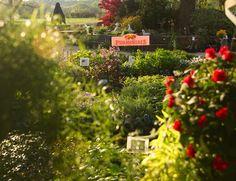Perennials | #starkbros #gardencenter