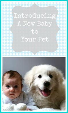 Introducing A New Baby To Your Pet - Great tips that will make bringing your baby home when you have pets. Baby Care, Pet Care, Baby Fever, Baby On The Way, Our Baby, Little Babies, Baby Kids, Fur Babies, Rund Ums Baby