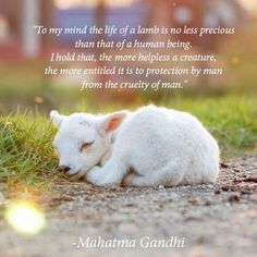 always amazing when I see folks supporting the lamb and veal industries...how disgusting and vile it is to hurt these innocent animals....