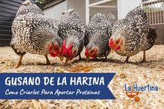 Rooster, Animals, Ranch, Natural, Vestidos, Small Farm, Wooden Animals, Portable Chicken Coop, Mini Farm