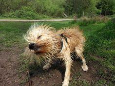 Wet dog shaking.