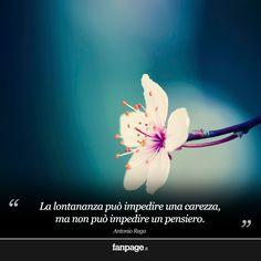 La lontananza può impedire una carezza, ma non può impedire un pensiero.
