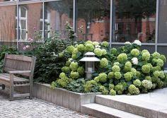 34 best Vorgarten, Nordseite images on Pinterest in 2018 | Flowers ...
