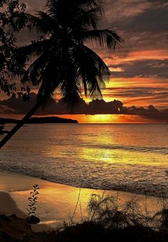 Tropical Paradise Sunset