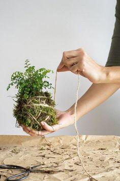 h ngende zimmerpflanzen und balkonpflanzen umweltgerechtes haus balkonpflanzen. Black Bedroom Furniture Sets. Home Design Ideas
