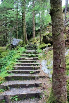 Check out this necessary photo as well as look into the here and now strategies and information on Easy Front Yard Landscaping Ideas Landscape Stairs, Landscape Design, Garden Design, Irish Landscape, Forest Landscape, Forest Garden, Garden Paths, Hillside Garden, Garden Stairs