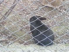 Black rabbit :)