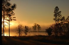 Paul B Johnson State Park, a Mississippi State Park located nearby Hattiesburg, Petal and Purvis