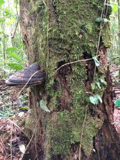 Floresta conceitual