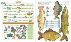 Aa School, School Clubs, Pond Life, Language, Paper Crafts, Comics, Winter, Animals, Weaving