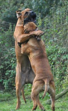 Big hug...big hug #Boxers
