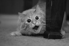 This picture creeps me out but it is a cute kitty, so...