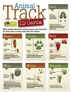 Animal Track ID Cards- What wild animals have been lurking around your farmyard? Use these clues to help track down the answer. Outdoor Education, Outdoor Learning, Cub Scouts Bear, Tiger Scouts, Nature Activities, Cub Scout Activities, Stem Activities, Animal Tracks, In Natura