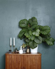 Houseplants in Interior DesignPamono Stories - Trend Bildungsarchitektur 2019 Interior Plants, Interior Design, Indoor Plants Clean Air, Decoration Plante, House Plants Decor, Plant Design, Houseplants, Modern, Home Decor