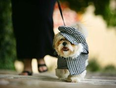 Adorable dog outfit