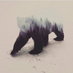 Norwegian artist Andreas Lie has created a series of stunning double exposure portraits, by blending images of animals, and landscapes. Body Art Tattoos, Cool Tattoos, Tatoos, Urso Bear, Tattoos Mandala, Forest Tattoos, Art Watercolor, Bear Art, Grafik Design