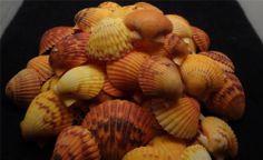 50pc Scallop Shells orange Natural Seashell Lot Sailors Valentine Crafts Shell
