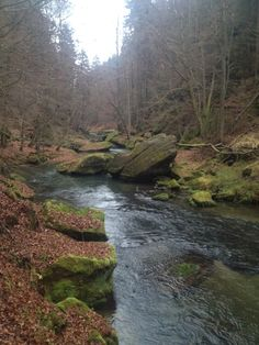 """See 55 photos and 4 tips from 1336 visitors to Hřensko. """"Starting point of many beautiful touristic trails. River, Outdoor, Beautiful, Outdoors, Outdoor Games, The Great Outdoors, Rivers"""