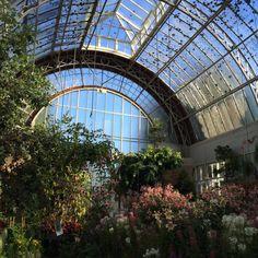 #interior #decor #plant #herb #greenhouse #оранжерея #растения #интерьер
