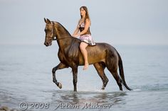 Such a lovely image with an Akhal Teke horse in water.