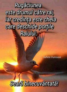 buna-seara_014 Good Night, Happy, Movies, Movie Posters, Google, Biblia, Languages, Rome, Nighty Night