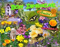 images bon dimanche Bon Weekend, Morning Images, Hui, Sunday, Messages, French, Cards, Good Mood, Have A Good Night